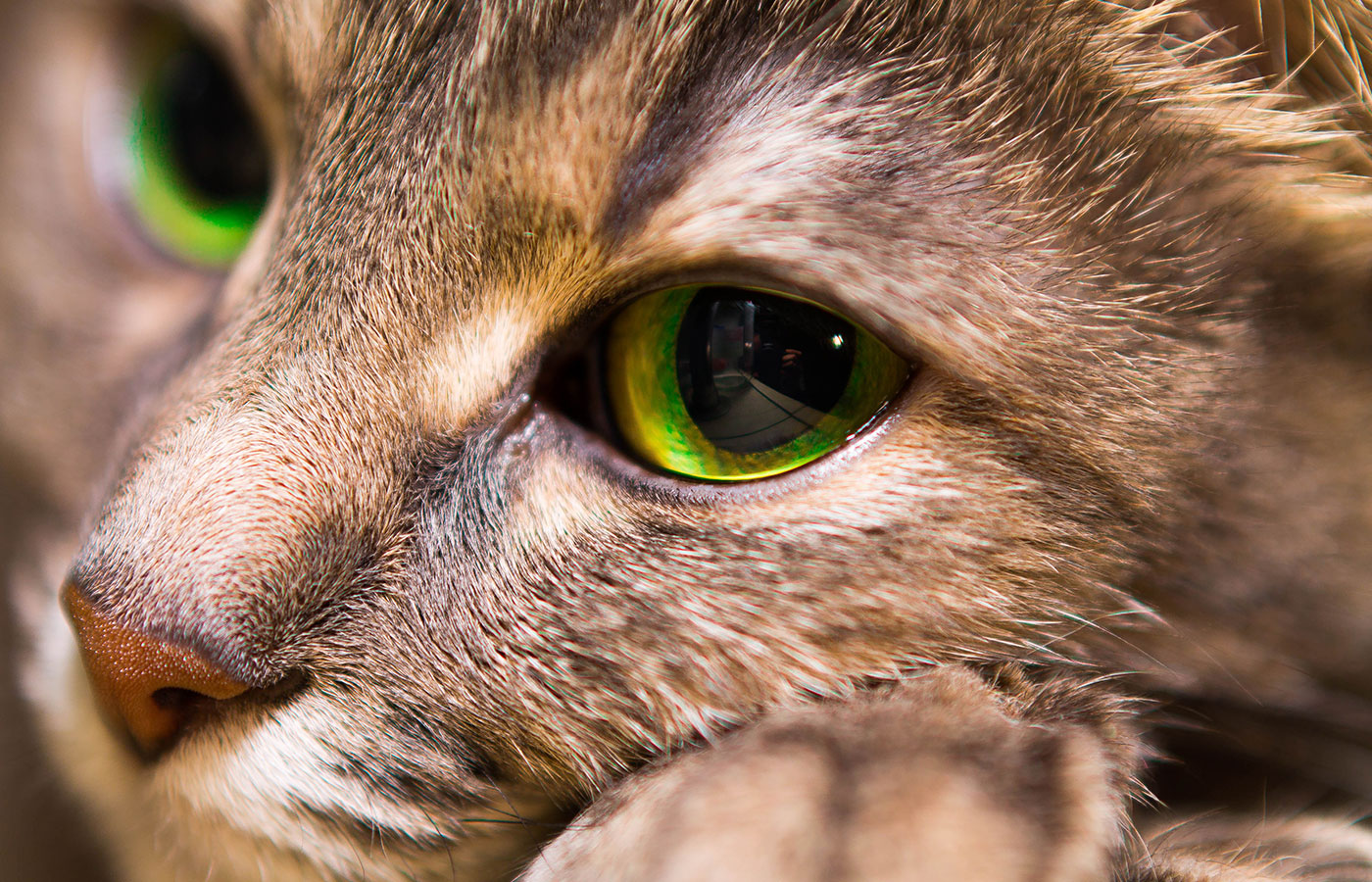 Portrait of a kind cat with big eyes, close up