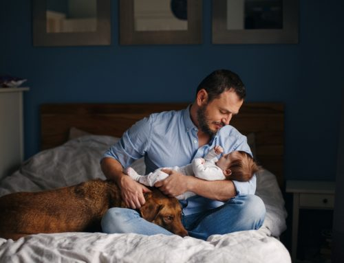 What Your Pet Can Expect When You're Expecting