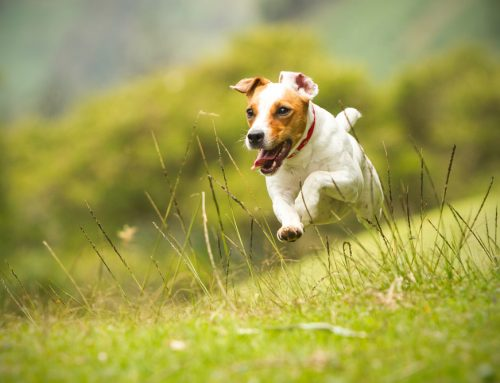 Ticked About Lyme Disease? A Complete Guide to Lyme Disease in Pets