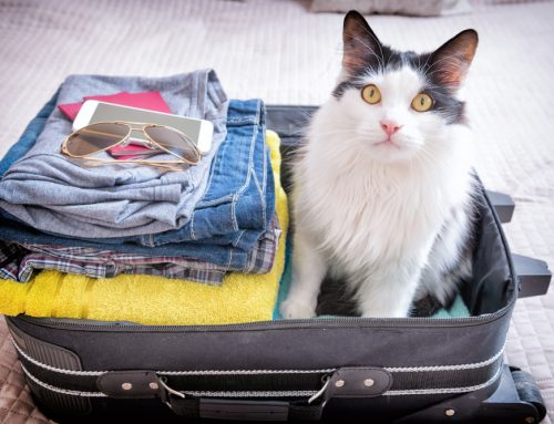 Planes, Trains, and Automobiles: Traveling with Pets
