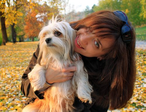 A Tale of Holiday Woe: A Lesson Learned for Lola the Lhasa Apso
