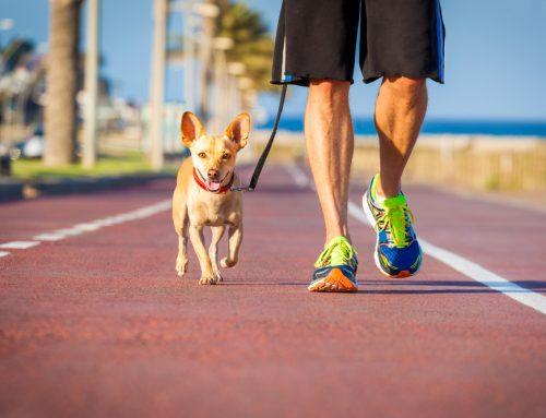 High-Tech Pet Health in 2020: Focus on the Basics