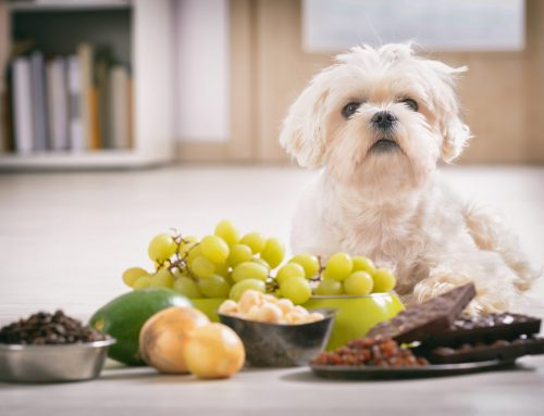 Hidden Household Dangers: Common Pet Toxins