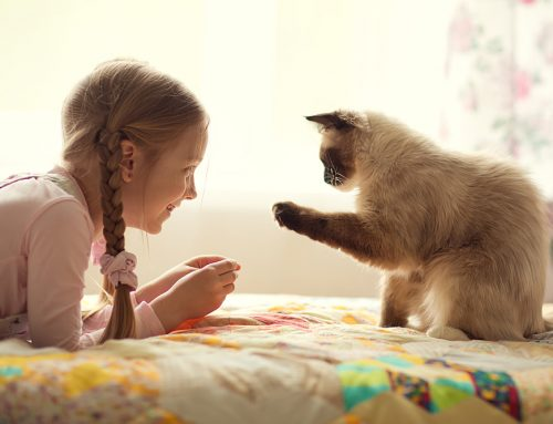 Let's Get Social: 6 Tips to Successfully Socialize Your Pet