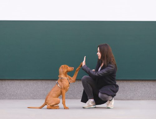 Top 8 Tips for Training Your Dog