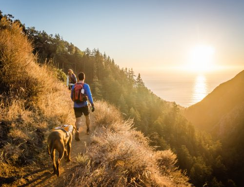 The S'More You Know: 5 Safety Tips for Hiking and Camping with Your Pet