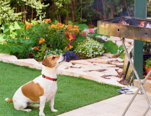 Cookout Safety Tips for Your Pet