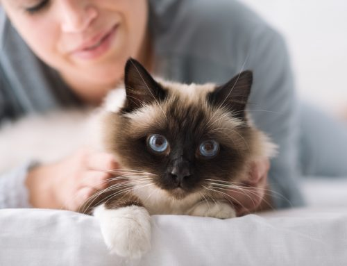 Feline Viral Infections—A Guideline for Cat Owners